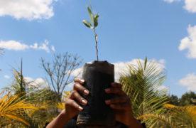 Madagas'care, un concentré d'actifs naturels en héritage